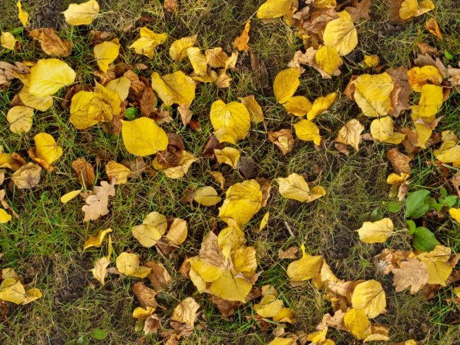 1617331092 Mulching Leaves for a Healthier Lawn