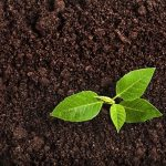 1617642641 how to test soil ph