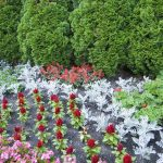 1618357378 30 easy plants to grow outside